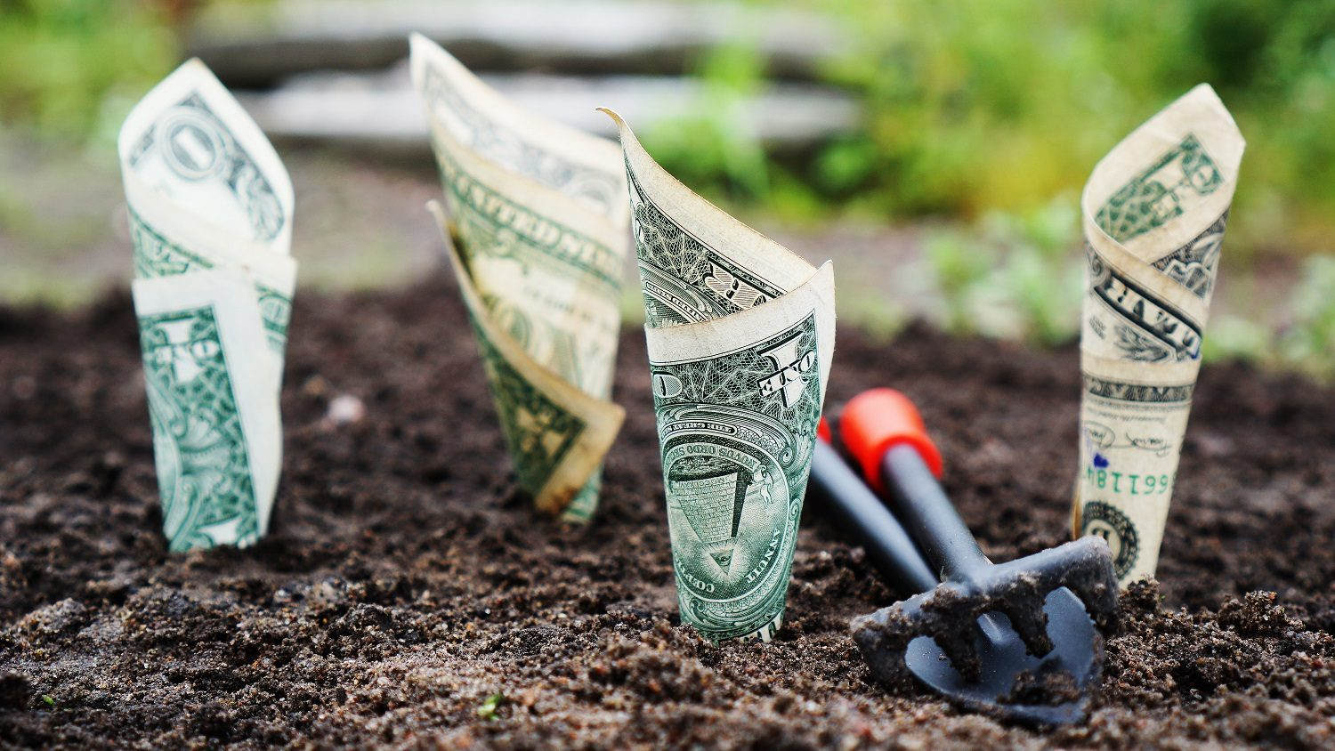 Rolled up dollar bills placed into soil