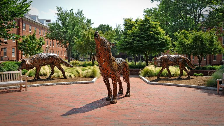 Three wolf statues on NC State's campus.